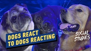 Dogs React to Dogs Reacting to John Wick Chapter 3 - Social Studies