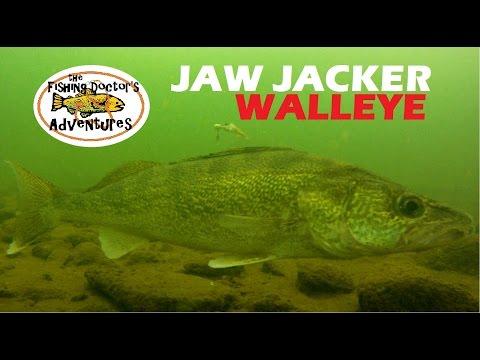 Understanding Walleye Underwater Behavior Ice Fishing the Jaw Jacker