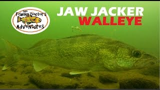 Understanding Walleye Underwater Behavior Ice Fishing the Jaw Jacker