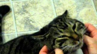 ヘッドマッサージを受ける猫、もみくちゃにされながらも幸せそうに笑う