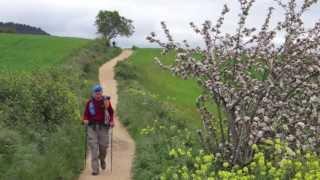 Walking The Camino de Santiago