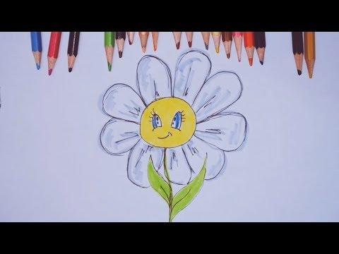 Как нарисовать ромашку карандашом