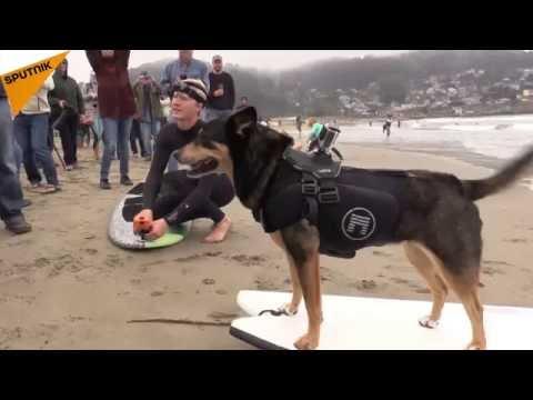 Championnat de surf pour chiens