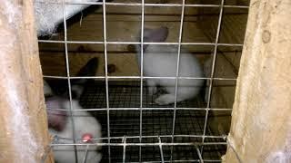 Содержание кроликов в условиях личного подсобного хозяйства