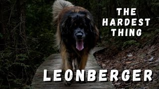 Leonberger Mom  The Hardest Part