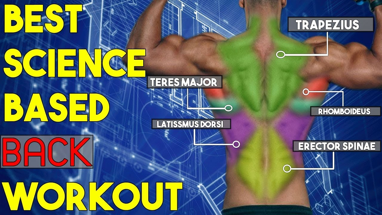 7 scientific back exercises you re not doing every muscle