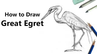 How to Draw a Great Egret with Pencils [Time Lapse]