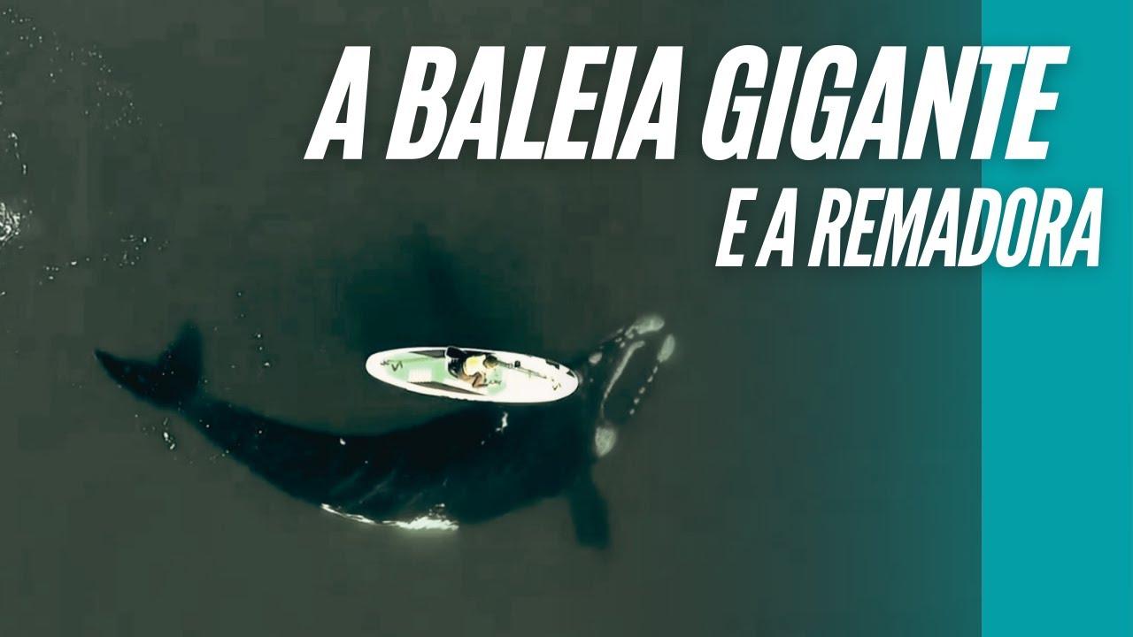 Encontro incrível de baleia-franca-austral com remadora na Argentina