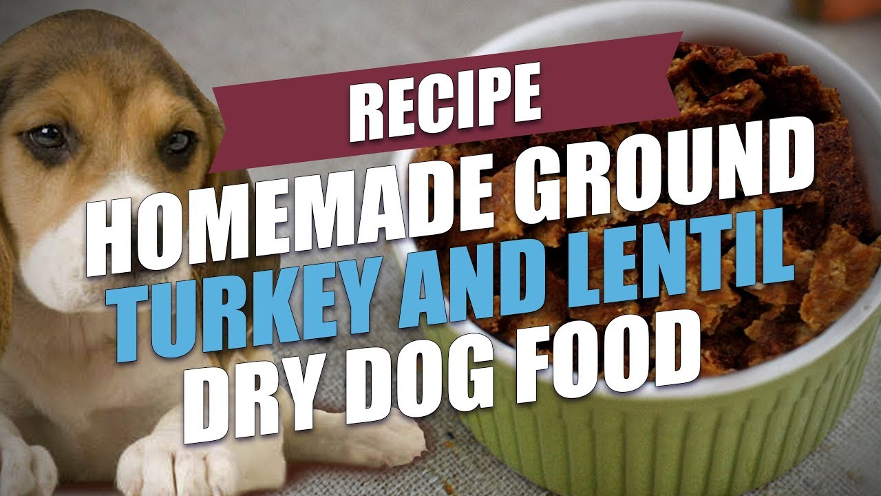 Homemade ground turkey and lentil dry dog food recipe youtube homemade ground turkey and lentil dry dog food recipe forumfinder Choice Image