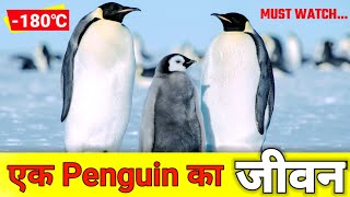 Life of a penguin | Amazing facts about penguin | Penguin ka jivan | life-cycle of a penguin