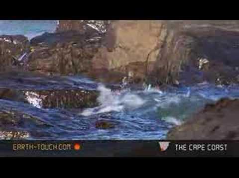 Seabirds forage in the intertidal zone