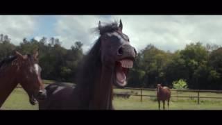 Grappig filmpje van paarden