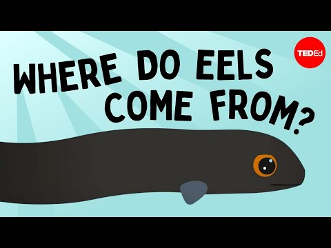 Eli the eel: A mysterious migration - James Prosek