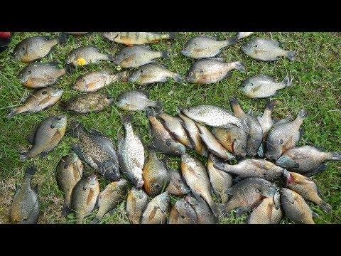 Vlog #23: Pennsylvania Panfish Fishing Slam