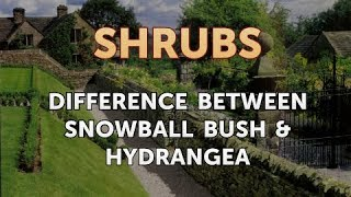 Difference Between Snowball Bush & Hydrangea