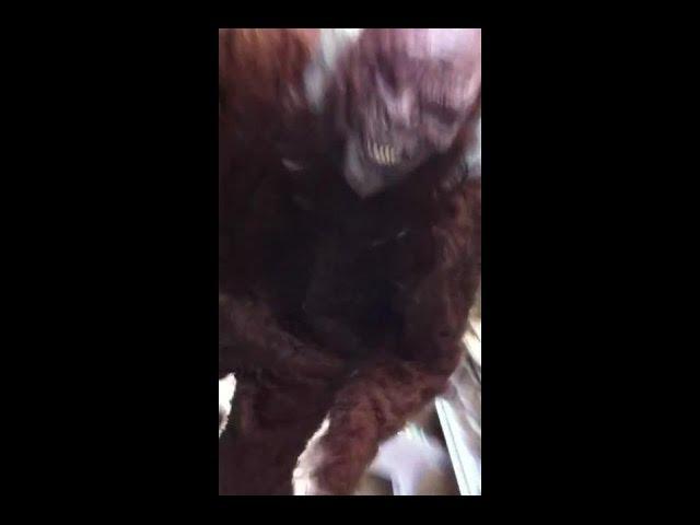 Sasquatch sighting caught on tape