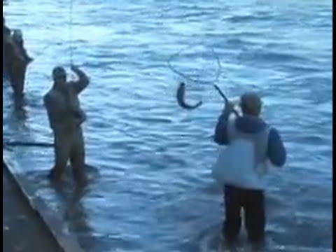 Kenai river sockeye salmon fishing the line soldotna for Kenai river salmon fishing