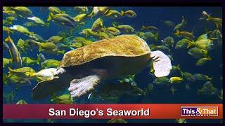 San Diego's SeaWorld (2018)