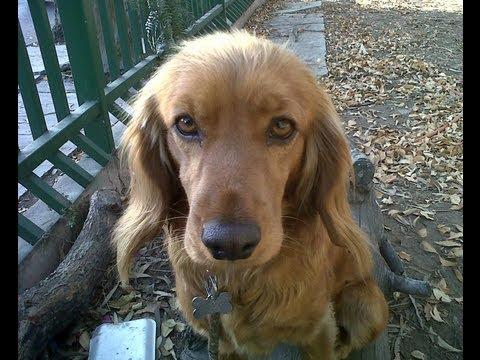DOG TRAINING, PUPPY TRAINING, sit, stay, kennel training, crate training