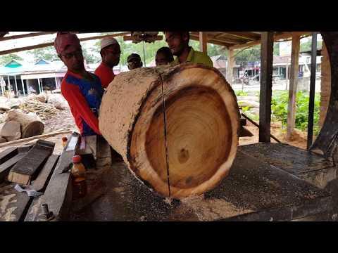 Espensive Teak $300 Per CFT Wood Cutting by Small Sawmill/Teak Wood Cutting Ways
