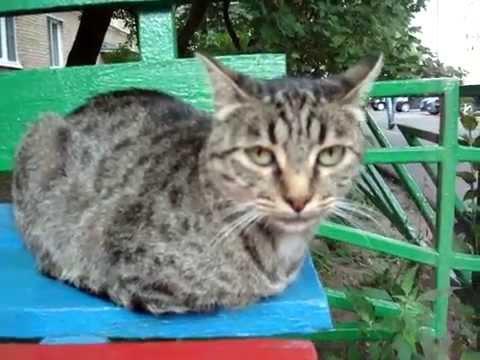 Мультфильмы про кошек Список лучших мультфильмов про
