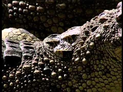 Phóng sự - Cá Sấu ở Việt Nam P1