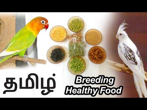 Cockatiel & African Lovebird breeding Food in Tamil ( தமிழ் )