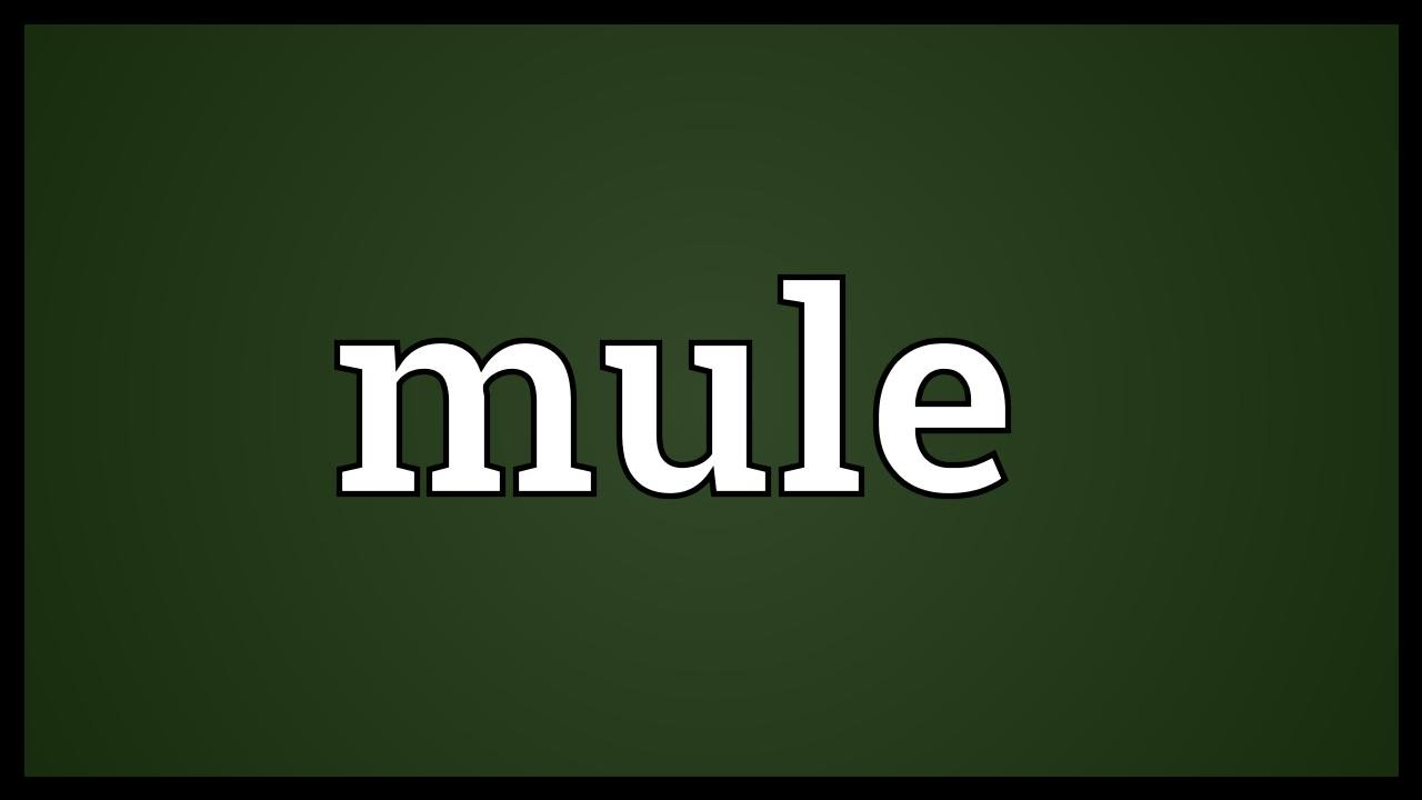 Mule Meaning