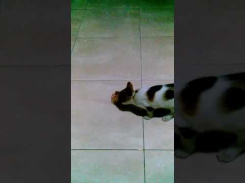2 cats playing ball