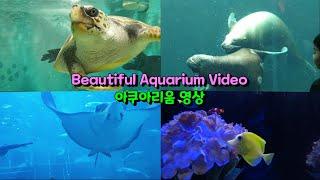 Aquarium Beautiful HD Video 신기…
