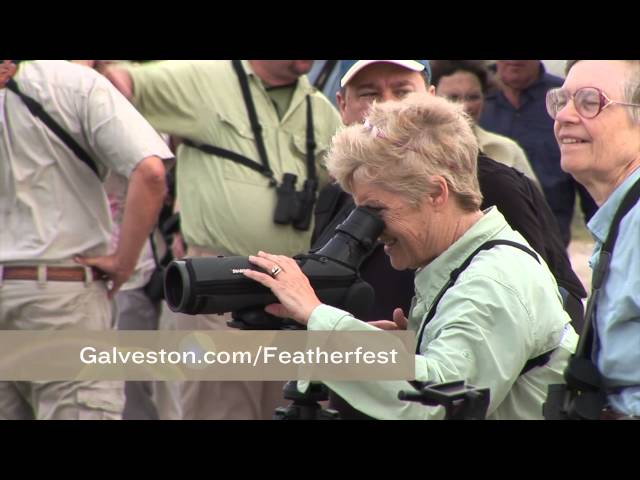 Galveston Nature Tourism