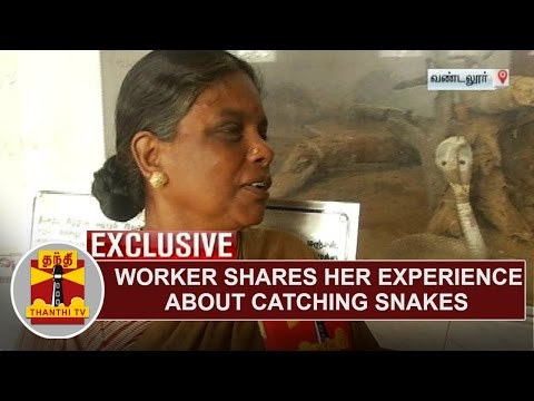 Vandalur Zoo worker Menaka shares her experience about Catching Snakes | Thanthi TV