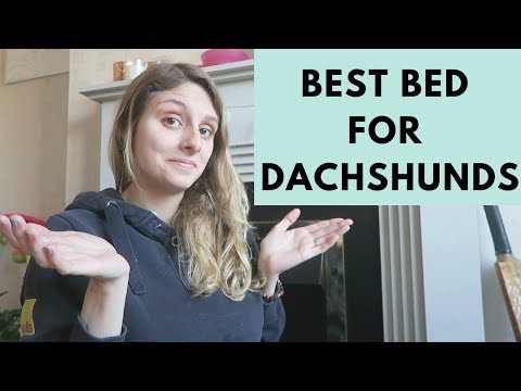 BEST DOG BEDS FOR MINI DACHSHUNDS