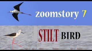 Stilt Bird... Zoomstory 7 !!!  ft Nikon P900