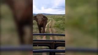 Elefante selvagem enfurecido persegue turista em s