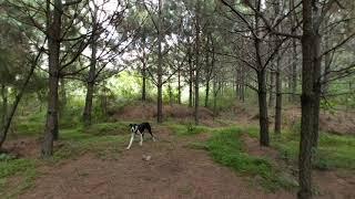 Perros en realidad virtual | Episodio #44