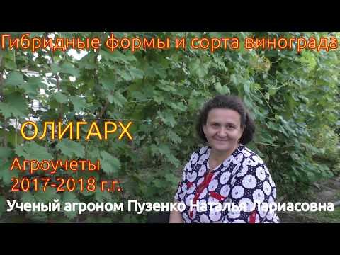 Олигарх - виноград с крупной ягодой и нежным вкусом (Пузенко Наталья Лариасовна)