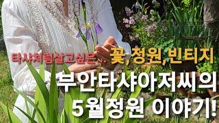 5월의정원 이야기와 고창가볼만한곳 카페베리 들꽃 야생화…