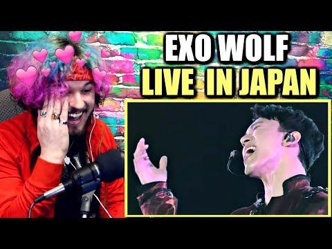 EXO - WOLF (The EXO'rDIUM in Japan) | CHEN & BAEKHYUN THO! | REACTION!!