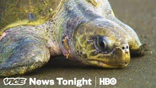 Turtle Crime & Vape Star Crackdown: VICE News Tonight Full Episode (HBO)