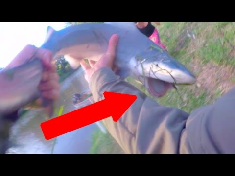 Shark fishing logan river stabbed by worlds deadliest for Where are the fish biting near me