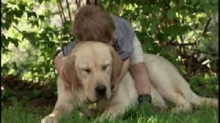 CUTE Little Boy & his dog HIGH QUALITY