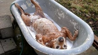 Download FUNNY DOGS, prepare yourself to CRY WITH LAUGHTER! - Best DOG VIDEOS Mp3 and Videos