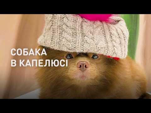 Телеканал ТВі | TVi: Собака в шляпе