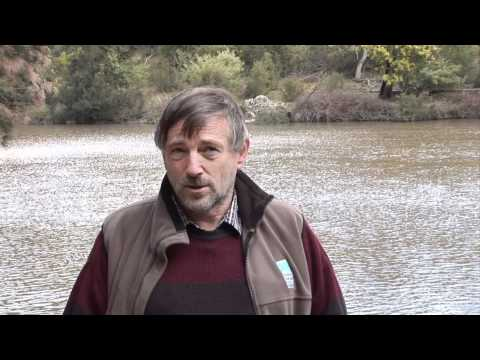 True Tales of the Trout Cod - Lachlan River HD.wmv