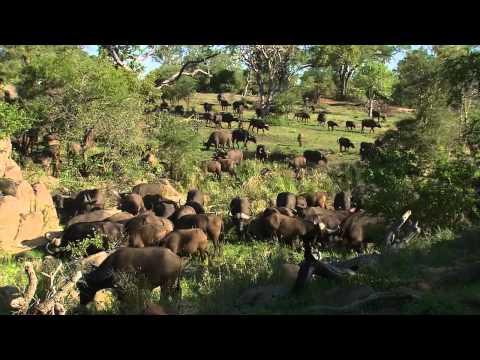 Africa's Super Seven - Part 1