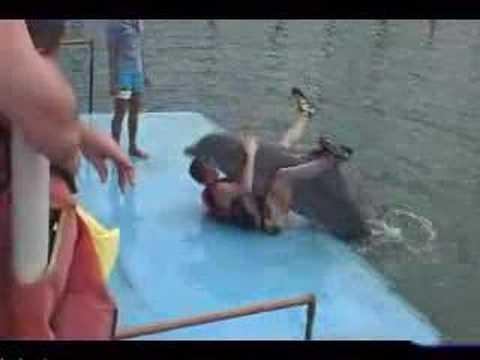 Секс с дельфинами смотреть онлайн бесплатно без регистрации