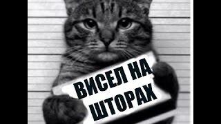 Приколы с котами и кошками для поднятия настроения! Подборка 2016-2017(CatsLIVE)