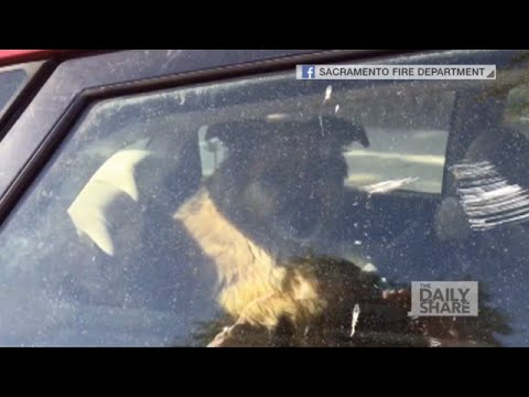 OMG video: Firemen save dog from hot car!