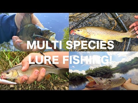 Multi species Lure fishing! Pike, Perch, Trout and chub!